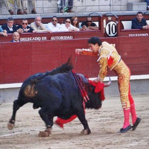 bullfighting cruelty