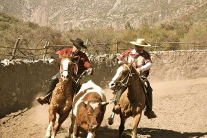 chilean rodeo facts