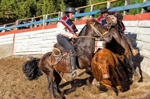 Chilean Rodeo athletes