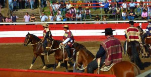 chilean rodeo horses