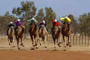 BOULIA CAMEL RACES