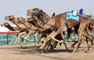 Camel Racing in UAE