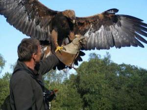 falconry birds