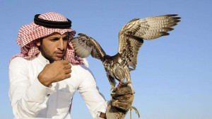 Falconry the sport of Sheiks