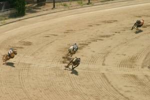 greyhound racing tracks