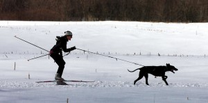 Betsy McGettigan of Norway heads for the finish line while competing in the one-dog