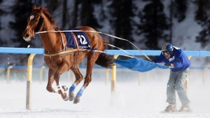 Skijoring with a horse