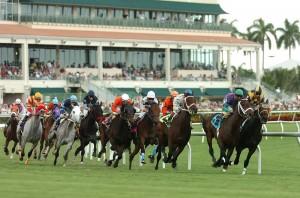 horse racing turf