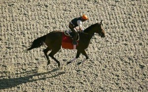 A racehorse is jogged on synthetic surface at Santa Anita