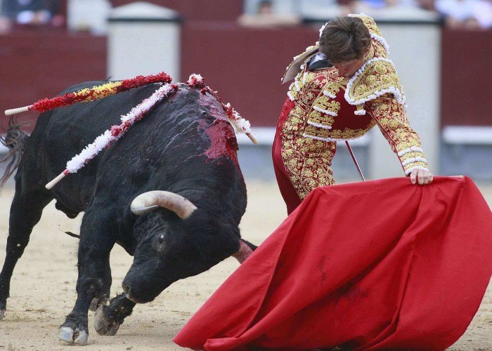 Bullfighting sport