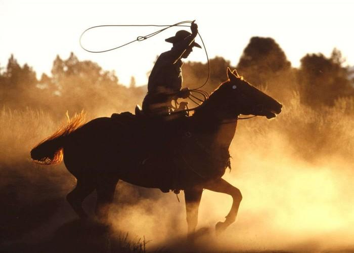 rodeo bull riding